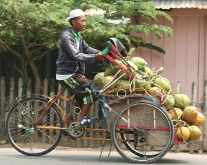 Transporting a load of coconuts.
