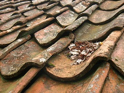 Clay tile roofs are the norm in Indonesia.