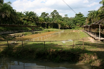 Pemancingan Sumber Sari Kuali Pecah, located in the village of Sumber Sari.