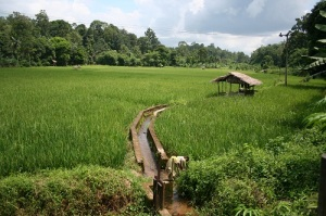 Rice field being watered from the near by foothills of the Barisan Mountain Range.