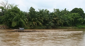 Fish trap in the middle of the Tabir River. The large trap is called a sukam.